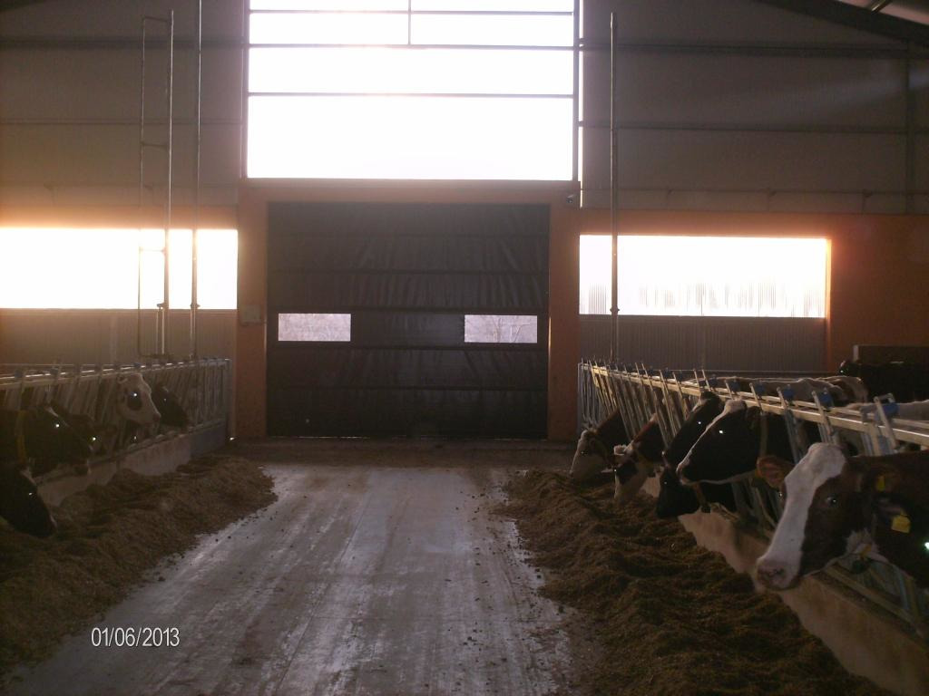 Automated Sidewalls Walls For Dairy Farms - 1/6